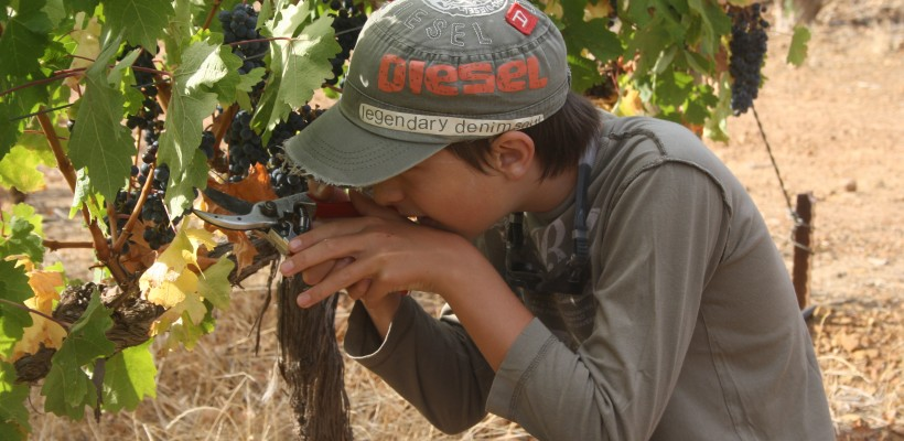 outdoor education, picking grapes